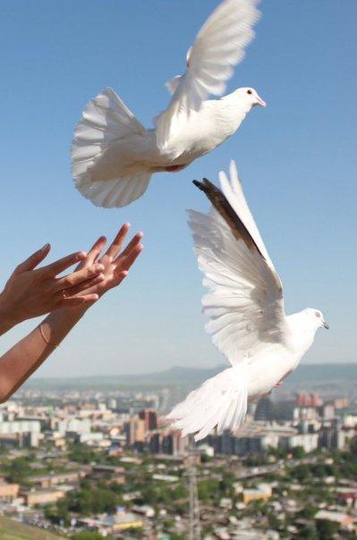 Голуби взлетают в небо