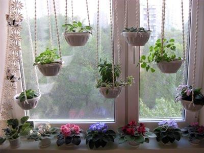 Цветы в горшках на окне