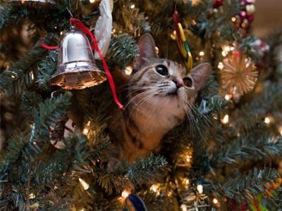 Кот на новогодней елке