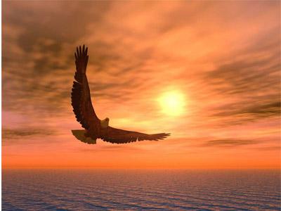 Орел парит в небесах