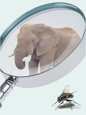 Слон и муха