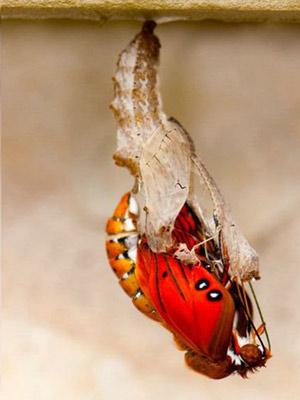 Гусеница превращается в бабочку