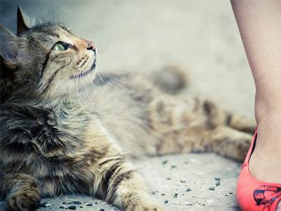 Кошка смотрит на женщину