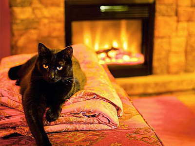 Черная кошка перед камином
