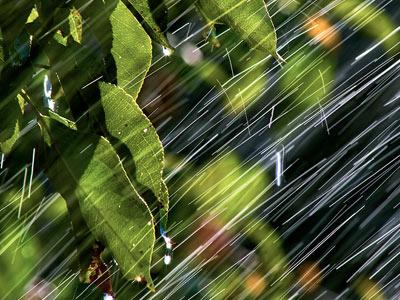 Тёплый, летний грибной дождь