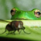 Хочешь быть счастливым — не будь лягушкой
