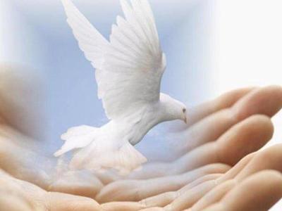 Птица садится на руку человека