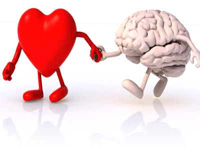 Сердце и мозг вместе