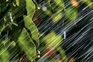 Заговор на грибной дождь
