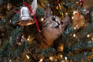 Необычное загадывание желаний под Старый Новый год