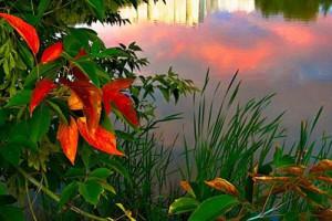 Осень моя золотая, ты в сердце огонь не туши…