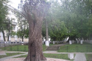Дерево желаний. Прошепчи мне желание, и оно сбудется